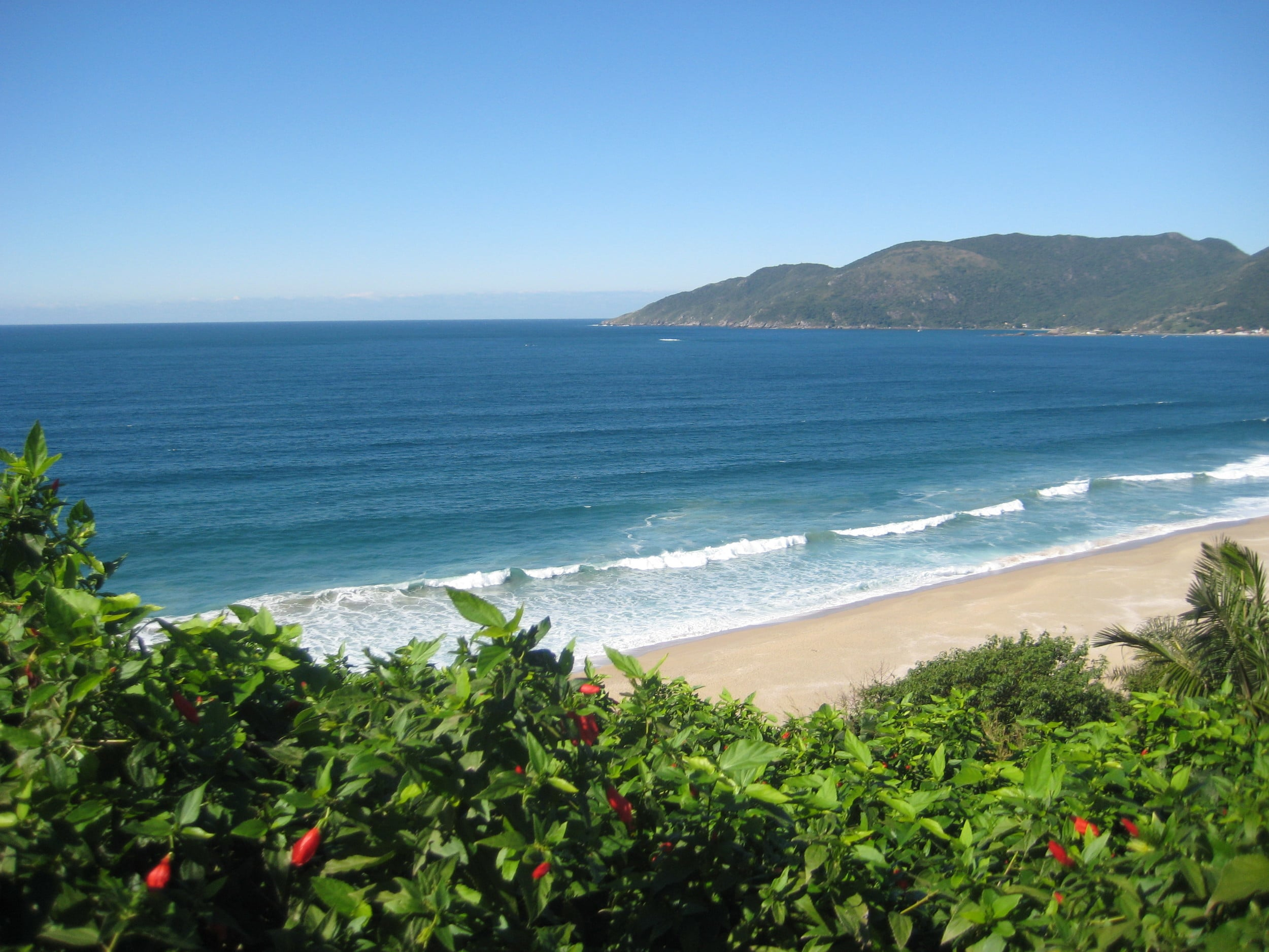 I love clean beaches, don't you? Let's keep them beautiful and take care of the wildlife. Florianopolis, Brasil