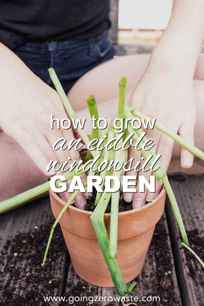How to Grow an Edible Windowsill Garden